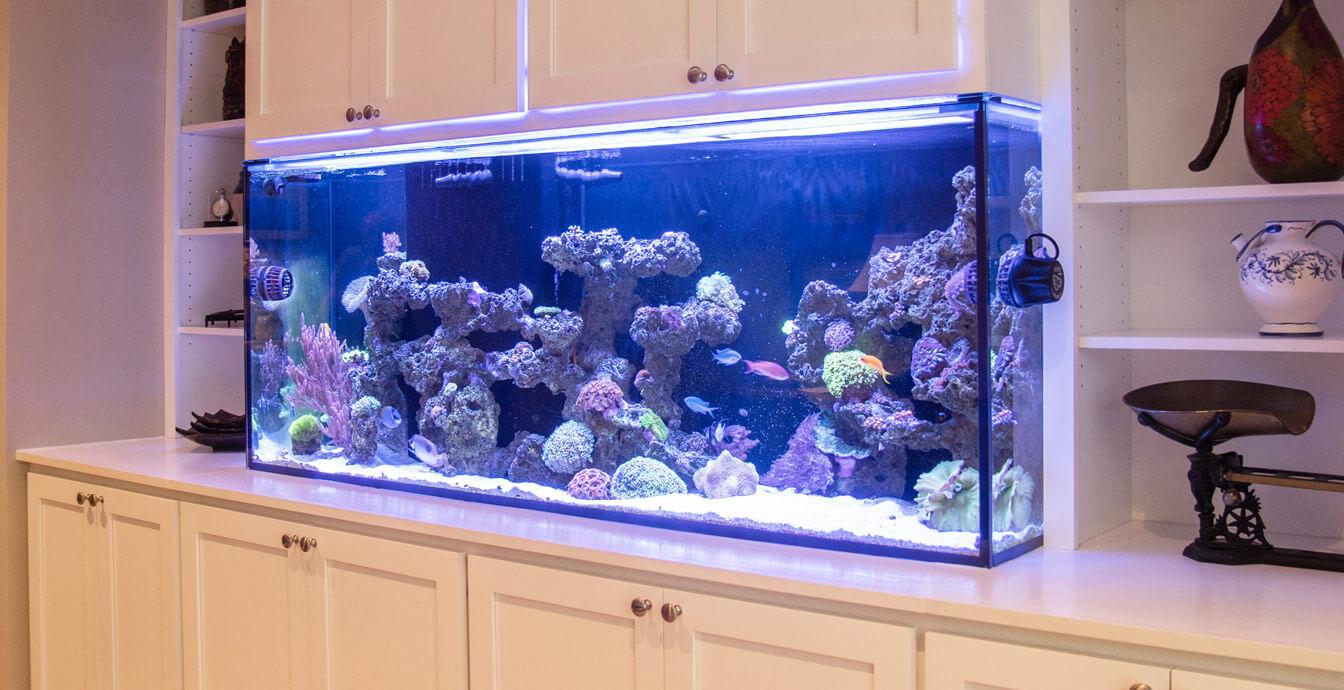 saltwater_reef_aquarium