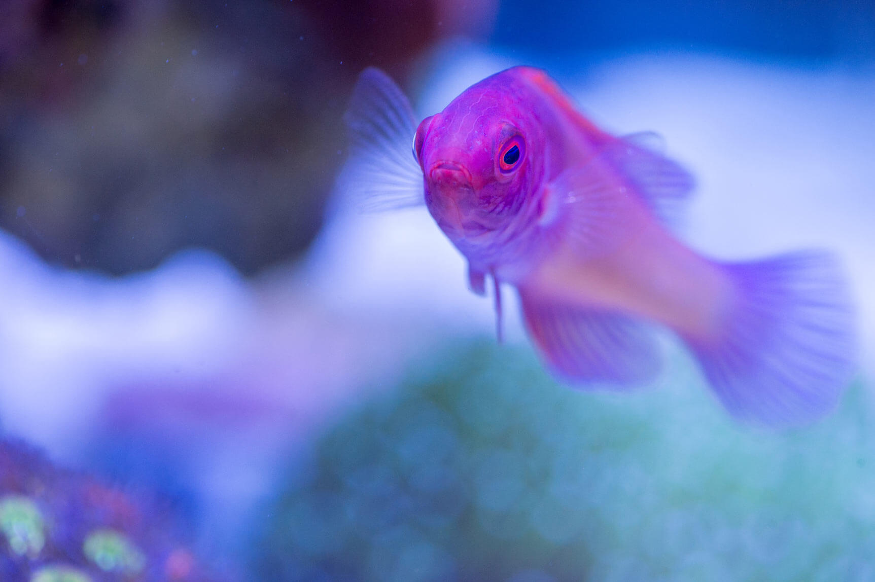 Keystone Reefscapes Freshwater and Saltwater Aquariums