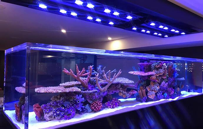 Keystone Reefscapes Saltwater & Freshwater Aquarium