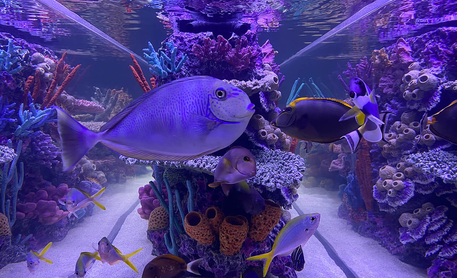 keystone-reefscapes-saltwater-and-freshwater-aquariums